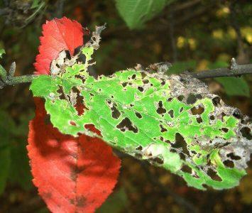 Das Bild zeigt Blätter mit Löchern als Symbol für schädigende oder nicht mehr passende Verhaltensmuster in Beziehungen.