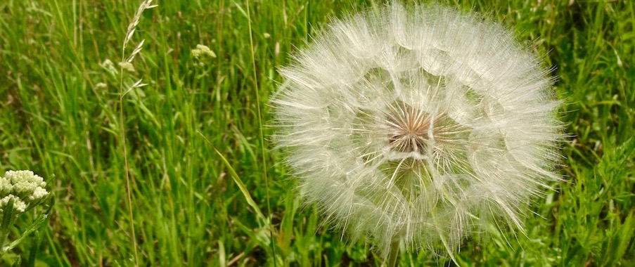 Eine zarte Blume symbolisiert die zarte Seele des Menschen, die durch Stress belastet ist.